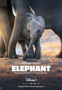 Eléphants (2020)
